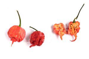 Carolina Reaper - Spicydays.com