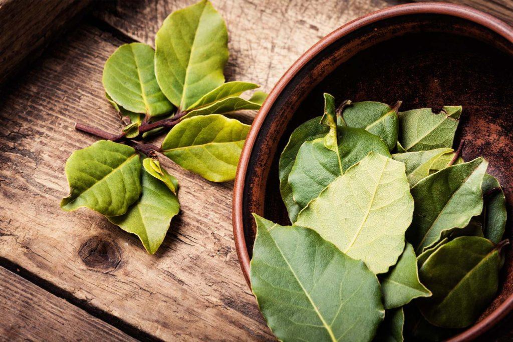 lovorov list zeleni